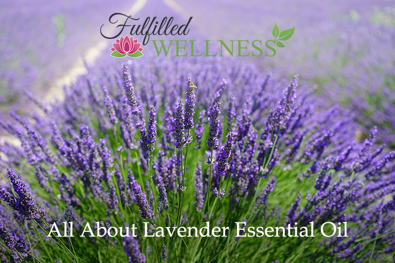 All About Lavender Essential Oil