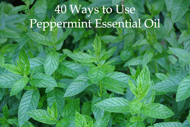 40 Ways to Use Peppermint Essential Oil