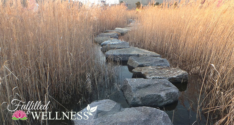 Stepping Stone Path in Reeds
